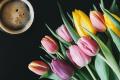 3 tipy na domáce rastliny pre zdravšiu domácnosť